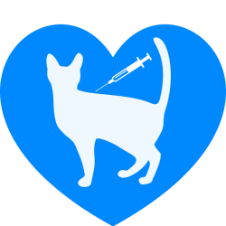 Il diabete felino in parole povere
