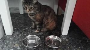 L'aumento di fame e di sete sono tra i sintomi del diabete felino